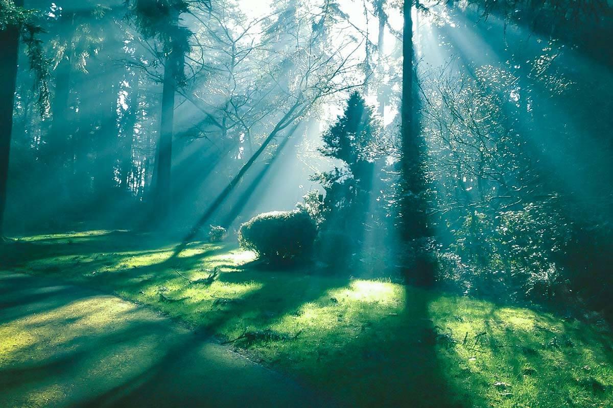 Chi Siamo Abies giardini asti