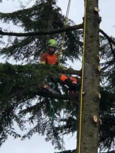 giardiniere tree climber ad asti