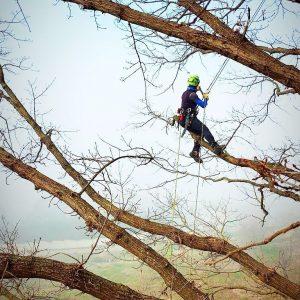 tree-climber-ad-asti