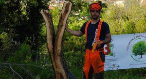 Giardiniere Asti tree climBer potature