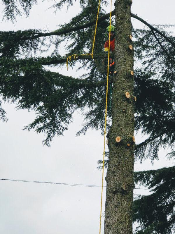 potatura alberi asti