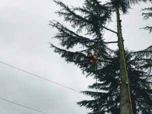 abbattimento alberi ad asti